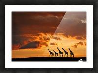 Five Giraffes Picture Frame print