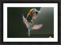 Fight Between Rainbows by Marco Redaelli  Picture Frame print