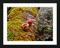 Tiny World 3 of 8 Picture Frame print