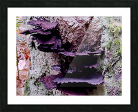 Tiny World 8 of 8 Picture Frame print