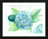 Lovely Blue Hydrangia  Picture Frame print