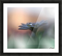 Eyes of the Light by Juliana Nan  Picture Frame print
