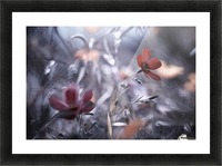Une Fleur, une Histoire by Fabien BRAVIN  Impression et Cadre photo