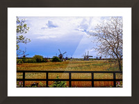 Windmills in Spring Picture Frame print
