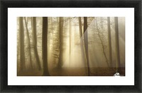 Into the Trees Picture Frame print