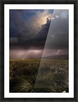 Summer Lights by Franz Schumacher  Picture Frame print