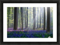 Bluebells Picture Frame print