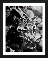 SPOTTED CAT Picture Frame print