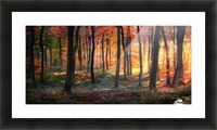 Autumn Woodland Sunrise Picture Frame print