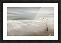 Ears in the Sea Picture Frame print