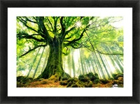 Ponthus Beech by Christophe Kiciak  Picture Frame print