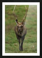 Deer Picture Frame print