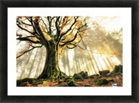 November by Christophe Kiciak  Picture Frame print