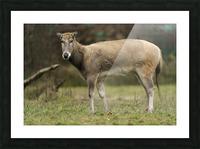 Reindeer Picture Frame print