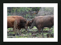 Bulls Picture Frame print