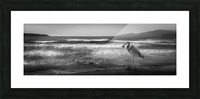 Great Blue Heron Picture Frame print