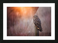 OWL Picture Frame print