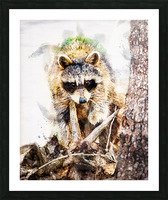 Raccoon In The Woods Picture Frame print