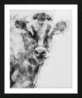 Dairy Cow Black and White Picture Frame print