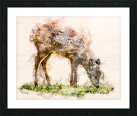 White Tail Deer Picture Frame print