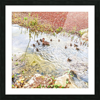 Spring Ducklings Picture Frame print