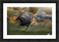 fiery gallop by milan malovrh  Picture Frame print