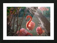 20181021 DSC 0492  2  1 Picture Frame print