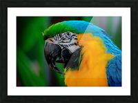 20181021 DSC 0292  2  1 Picture Frame print