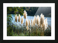 20181104 DSC 0282  3  Picture Frame print