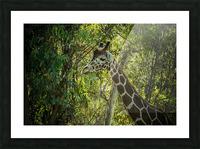 20181104 DSC 0202  3  Picture Frame print