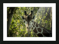 20181104 DSC 0191  3  Picture Frame print