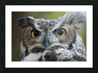 Owl  5 Picture Frame print