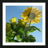 Summer Sky Flowers 8 AUG 2020 Picture Frame print