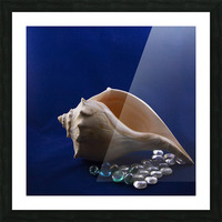 Single Conch Shell With Colored Glass  Picture Frame print