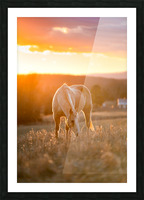 White Horse at Sunset Picture Frame print