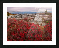 Bear Rocks Preserve apmi 1792 Picture Frame print