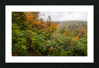 Blackwater Gorge apmi 1896 Picture Frame print