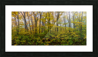 Colors of Nature apmi 1857 Picture Frame print