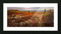 Colors of Nature apmi 1782AL Picture Frame print