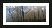 Treeline apmi 1867 Picture Frame print