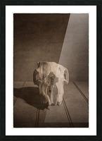 Cranium Picture Frame print