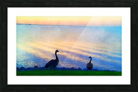 pierce anderson two birds Picture Frame print