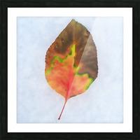 snow leaf Picture Frame print