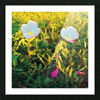 spring flowers Picture Frame print