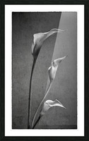 Etude Zen 8 c Picture Frame print