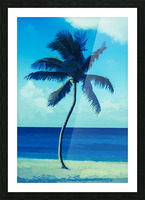 palm color 6 Picture Frame print
