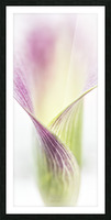 Aurore boreale 3 Picture Frame print