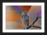 OWL - Stylized Picture Frame print