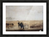 Buffalo watering Picture Frame print