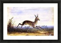 Antelope running Picture Frame print